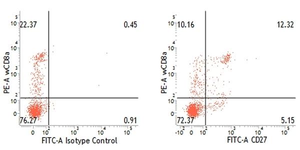 Anti Pig CD27 Antibody, clone B30C7 thumbnail image 4