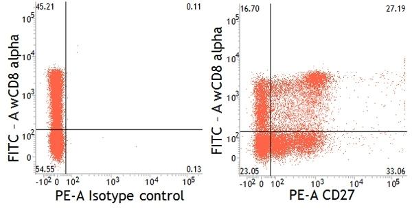 Anti Pig CD27 Antibody, clone B30C7 thumbnail image 5