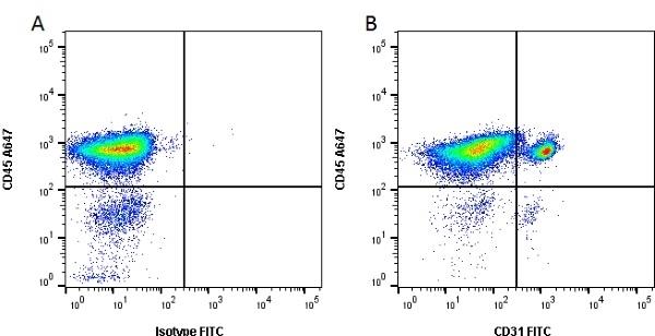 Anti Pig CD31 Antibody, clone LCI-4 thumbnail image 1