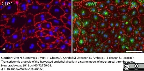 Anti Pig CD31 Antibody, clone LCI-4 thumbnail image 11