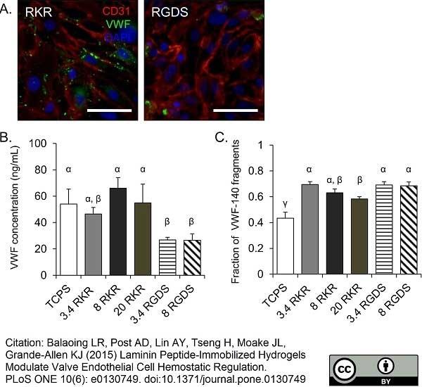 Anti Pig CD31 Antibody, clone LCI-4 thumbnail image 3