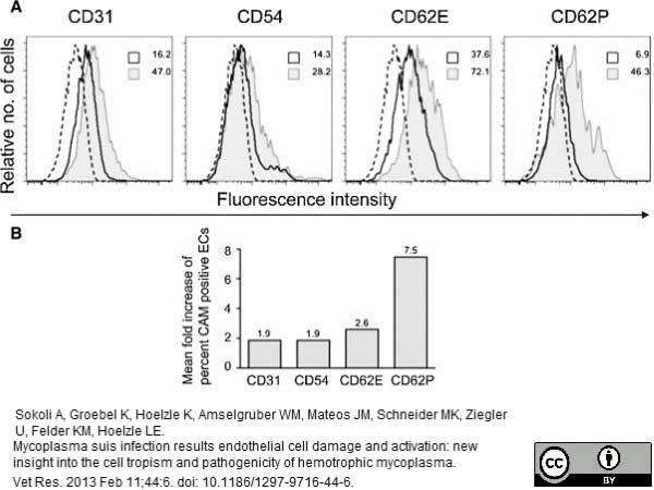 Anti Pig CD31 Antibody, clone LCI-4 thumbnail image 4
