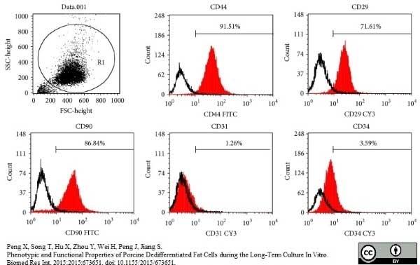 Anti Pig CD31 Antibody, clone LCI-4 thumbnail image 7