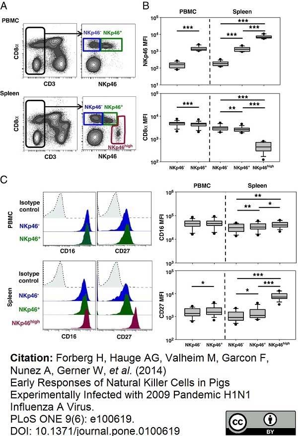 Anti Pig CD335 Antibody, clone VIV-KM1 thumbnail image 10