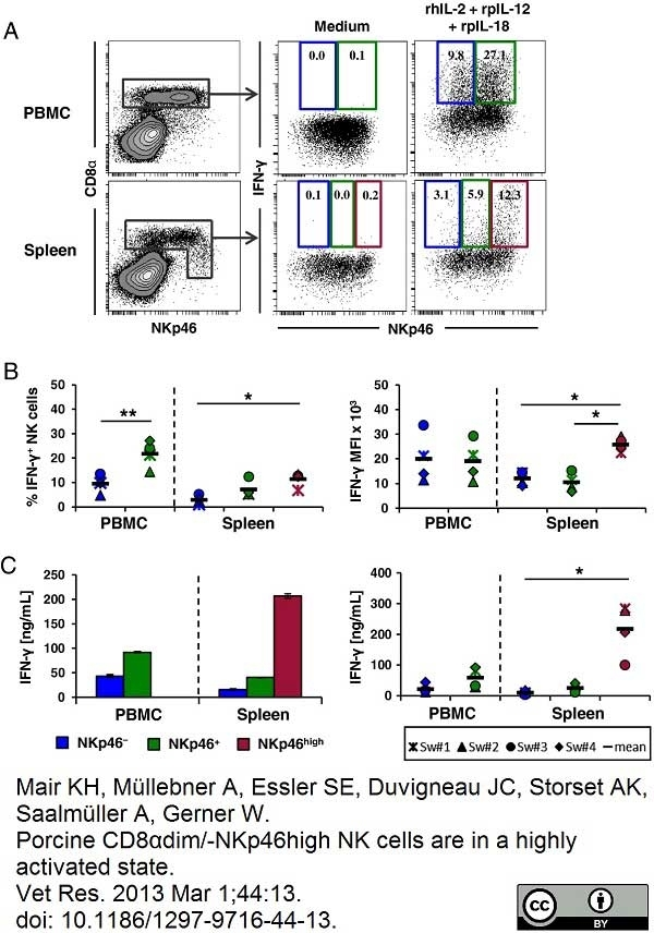 Anti Pig CD335 Antibody, clone VIV-KM1 thumbnail image 11
