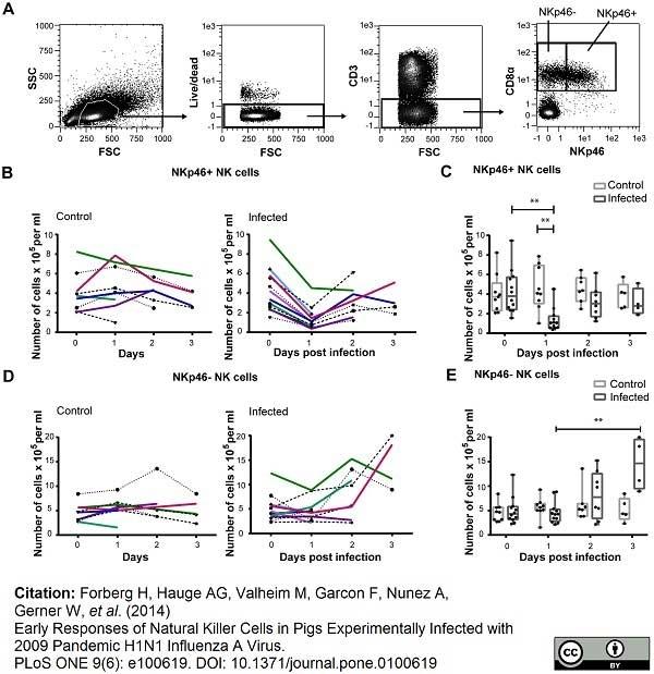 Anti Pig CD335 Antibody, clone VIV-KM1 thumbnail image 4