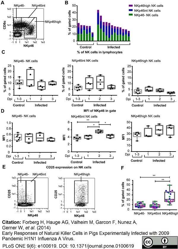 Anti Pig CD335 Antibody, clone VIV-KM1 thumbnail image 5