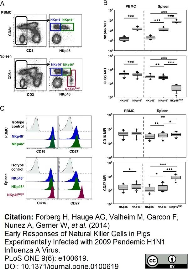 Anti Pig CD335 Antibody, clone VIV-KM1 thumbnail image 9