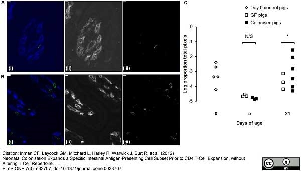 Anti Pig CD4 Alpha Antibody, clone MIL17 thumbnail image 4