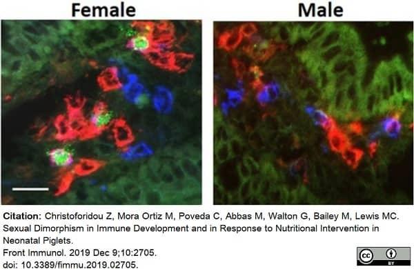 Anti Pig CD4 Alpha Antibody, clone MIL17 thumbnail image 9