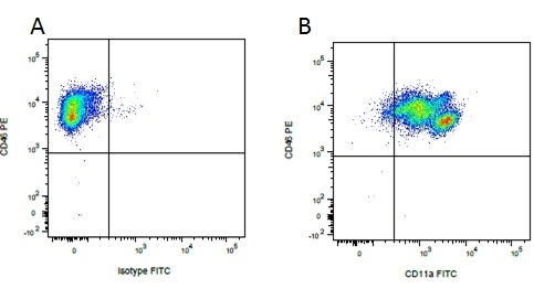 Anti Pig CD46 Antibody, clone JM6C11 thumbnail image 4