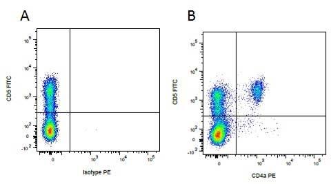 Anti Pig CD5 Antibody, clone 1H6/8 thumbnail image 2