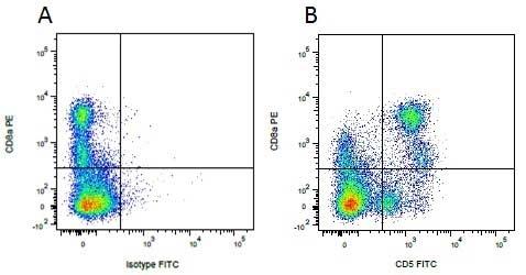 Anti Pig CD5 Antibody, clone 1H6/8 thumbnail image 5