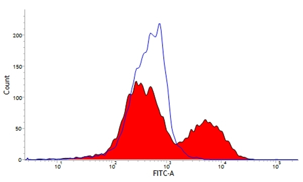 Anti Pig wCD6 Antibody, clone MIL8 thumbnail image 1