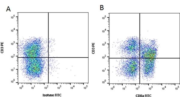 Anti Pig CD8 Alpha Antibody, clone 11/295/33 thumbnail image 1