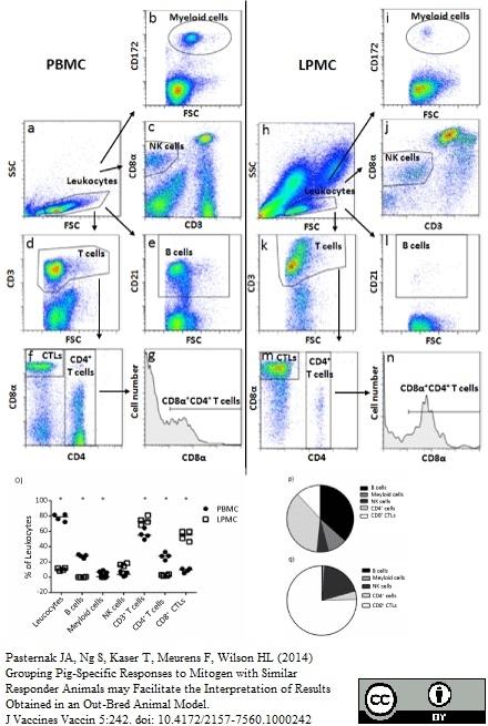 Anti Pig wCD8 Alpha Antibody, clone MIL12 thumbnail image 2