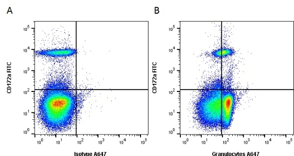 Anti Pig Granulocytes Antibody, clone 2B2 thumbnail image 2