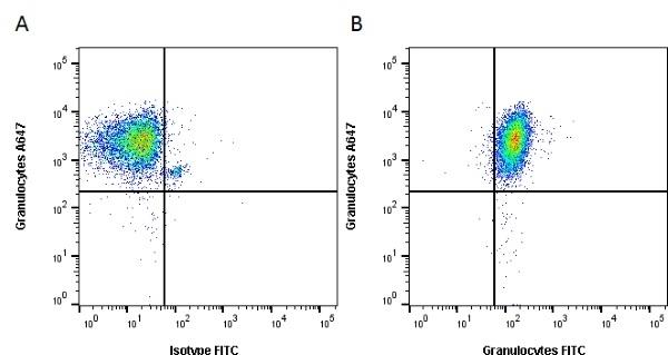 Anti Pig Granulocytes Antibody, clone 2B2 thumbnail image 3