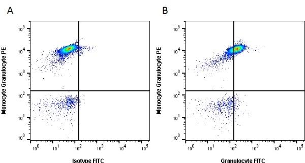 Anti Pig Granulocytes Antibody, clone 2B2 thumbnail image 4