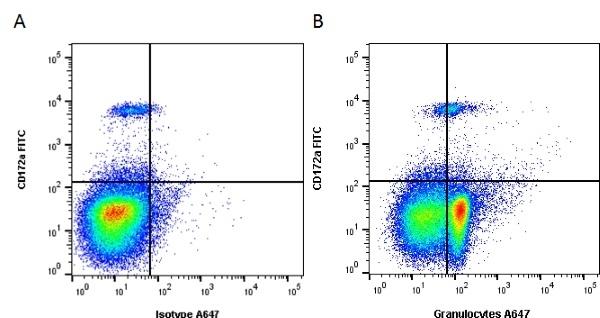 Anti Pig Granulocytes Antibody, clone 6D10 thumbnail image 1