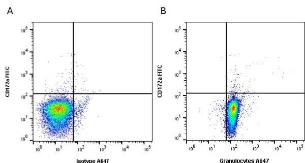 Anti Pig Granulocytes Antibody, clone 6D10 thumbnail image 2
