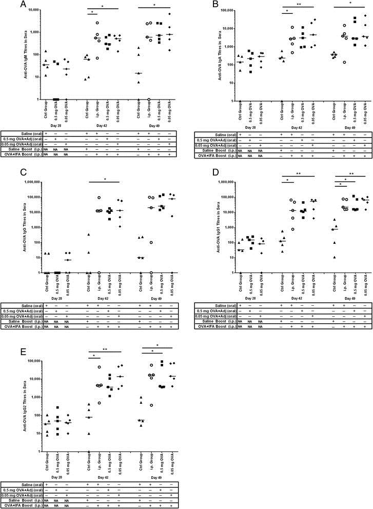 Anti Pig IgA Antibody, clone K61 1B4 thumbnail image 1