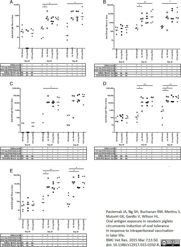 Anti Pig IgA Antibody, clone K61 1B4 thumbnail image 2