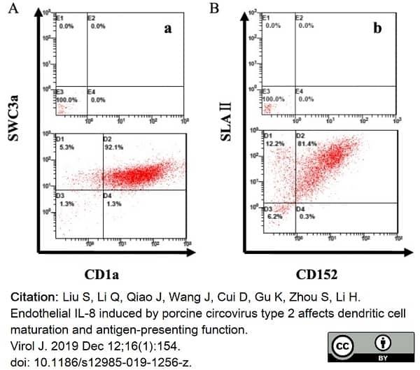 Anti Pig SLA Class II DR Antibody, clone 2E9/13 thumbnail image 4
