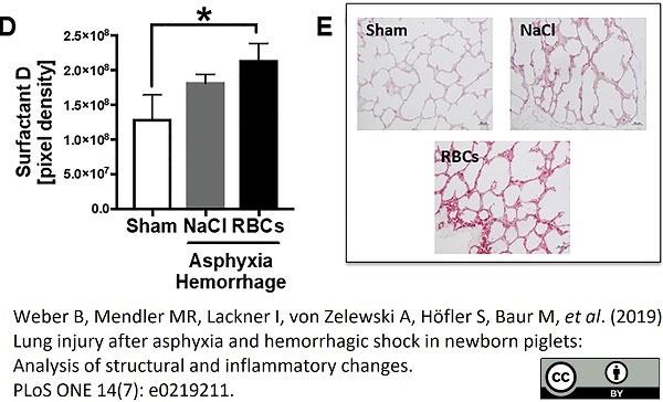 Anti Pig Surfactant Protein D Antibody, clone 1.7 thumbnail image 1