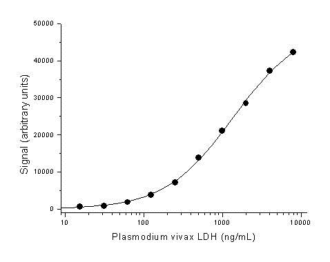 Anti Plasmodium vivax LDH Antibody, clone AbD13978 thumbnail image 1