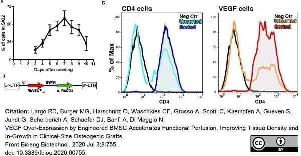 Anti Rabbit CD4 Antibody, clone KEN-4 thumbnail image 5
