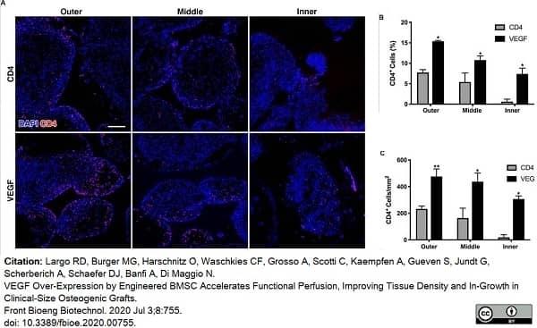Anti Rabbit CD4 Antibody, clone KEN-4 thumbnail image 6