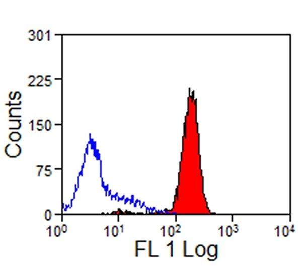 Anti Rabbit CD44 Antibody, clone W4/86 thumbnail image 1