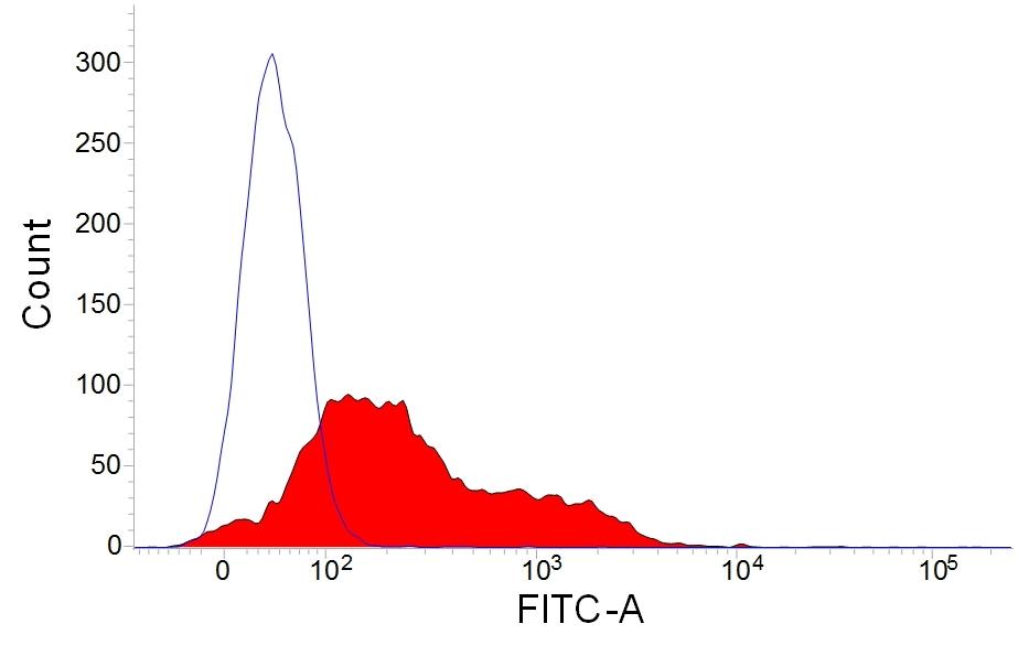 Anti Rabbit IgM (B Cell Marker) Antibody, clone NRBM thumbnail image 1
