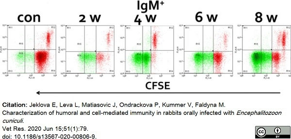 Anti Rabbit IgM (B Cell Marker) Antibody, clone NRBM thumbnail image 3