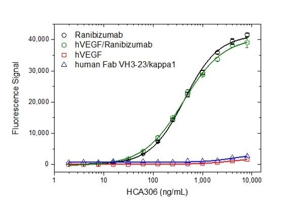Anti Ranibizumab Antibody, clone AbD29858 thumbnail image 2