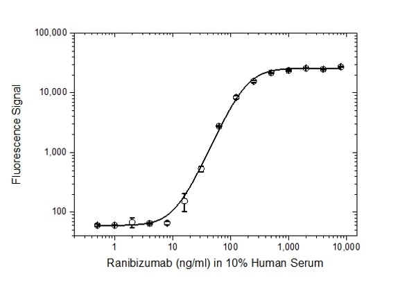 Anti Ranibizumab Antibody, clone AbD29858 thumbnail image 3