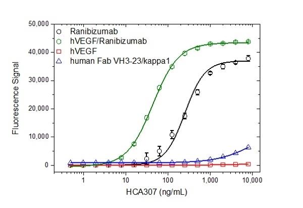 Anti Ranibizumab Antibody, clone AbD29865 thumbnail image 2