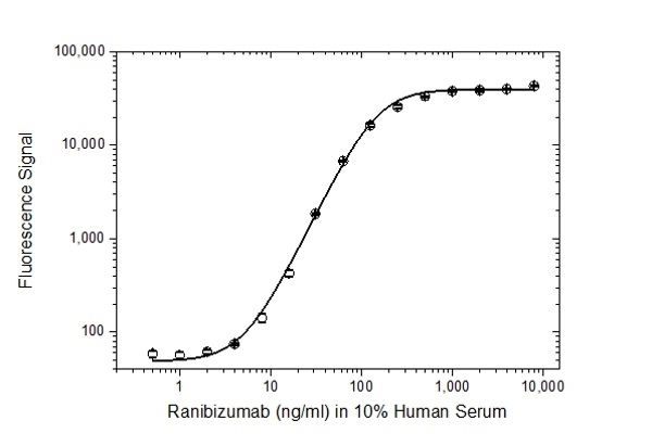 Anti Ranibizumab Antibody, clone AbD29865 thumbnail image 3