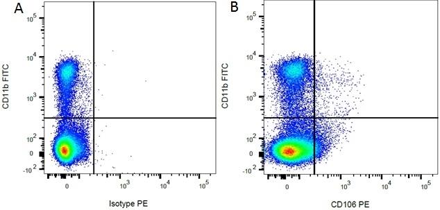 Anti Rat CD11b Antibody, clone ED8 thumbnail image 1