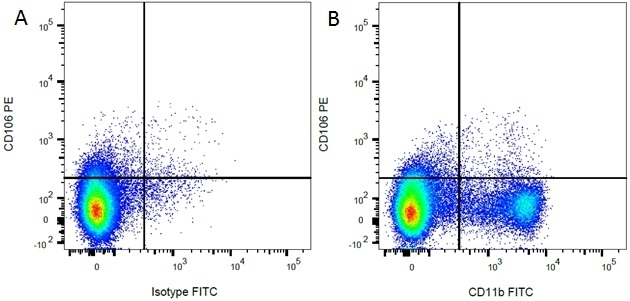 Anti Rat CD11b Antibody, clone ED8 thumbnail image 2