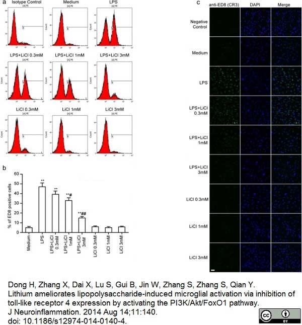 Anti Rat CD11b Antibody, clone ED8 thumbnail image 7