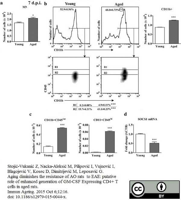 Anti Rat CD11b Antibody, clone ED8 thumbnail image 9