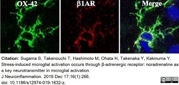 Anti Rat CD11b Antibody, clone OX-42 thumbnail image 29