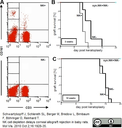 Anti Rat CD161 Antibody, clone 10/78 thumbnail image 2
