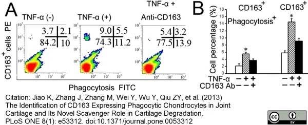 Anti Rat CD163 Antibody, clone ED2 thumbnail image 12