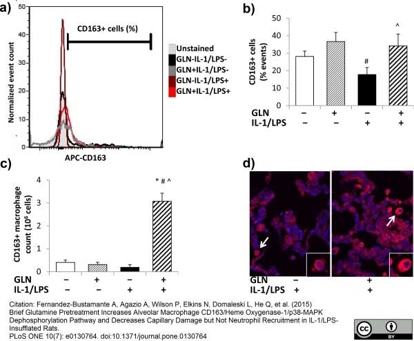 Anti Rat CD163 Antibody, clone ED2 thumbnail image 14