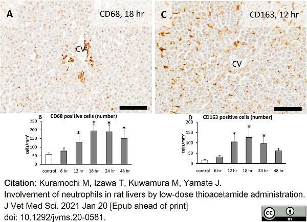 Anti Rat CD163 Antibody, clone ED2 thumbnail image 21