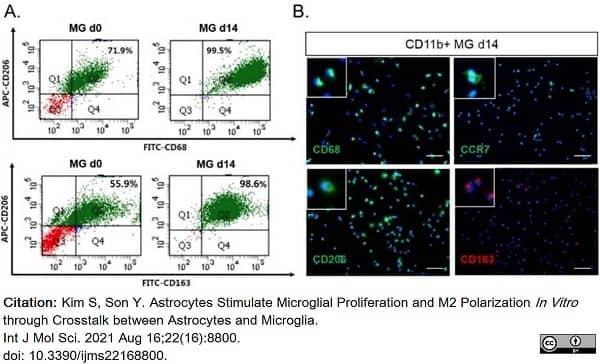 Anti Rat CD163 Antibody, clone ED2 thumbnail image 23