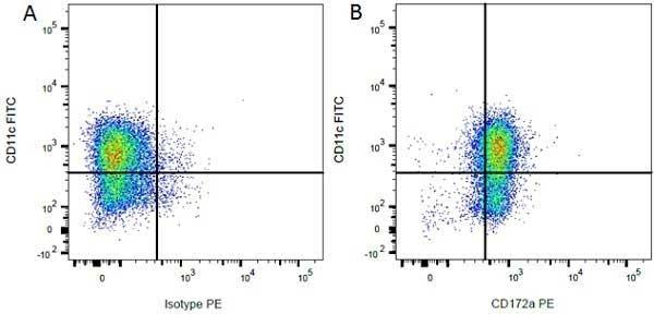 Anti Rat CD172a Antibody, clone ED9 thumbnail image 9